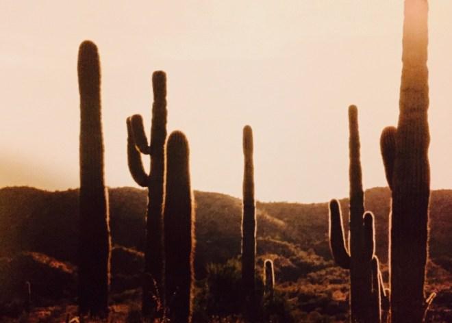 Vulture Peak Saguaro Cacti Sunset