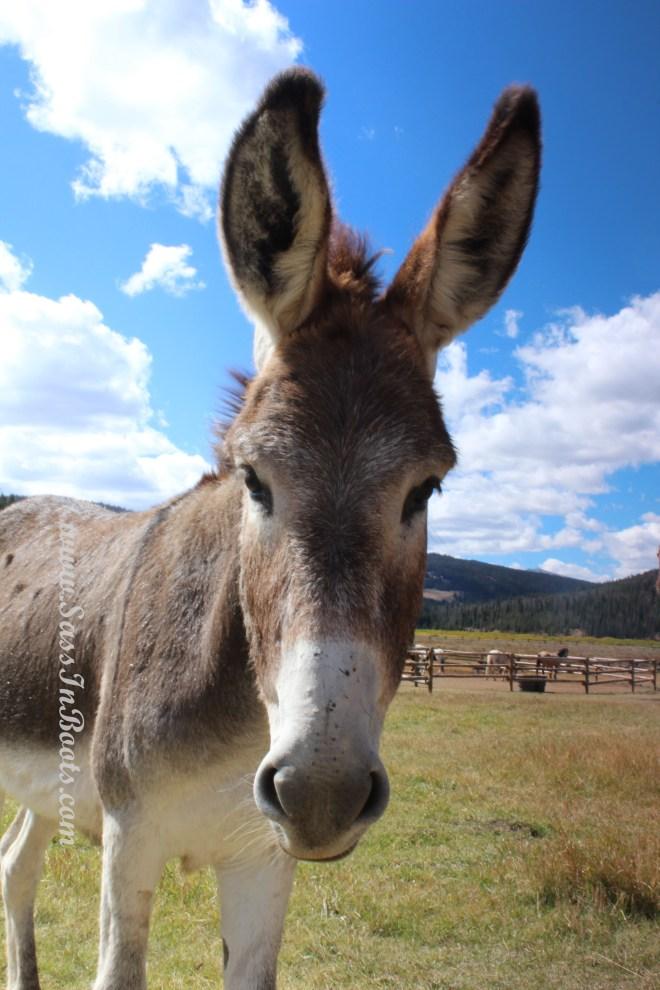 donkey-face