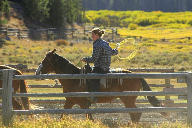 Cowgirl Wrangling Horses