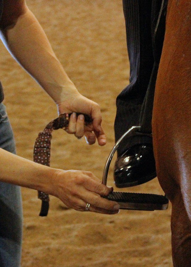Professional Groom Horse Show HelpProfessional Groom Horse Show Help