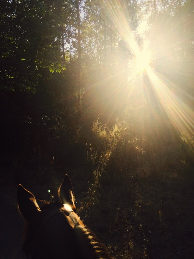 Horseback Ride In The Sunshine