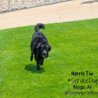Basic Dog Training and Tips From Harris the Las Vegas Service Dog
