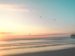 Birds over the ocean sunrise.