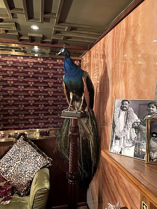 Bandra Bhai Peacock ©SatedOnline