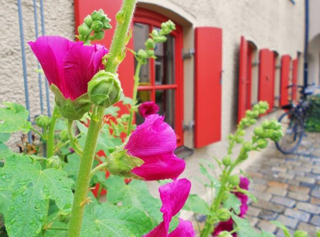 Photo Essay: Adorable Augsburg