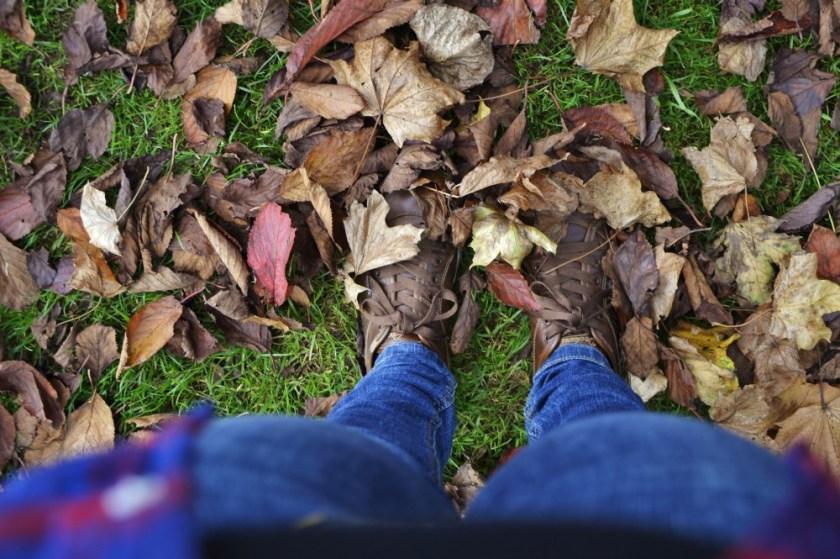 Fall in Malahide park, Ireland