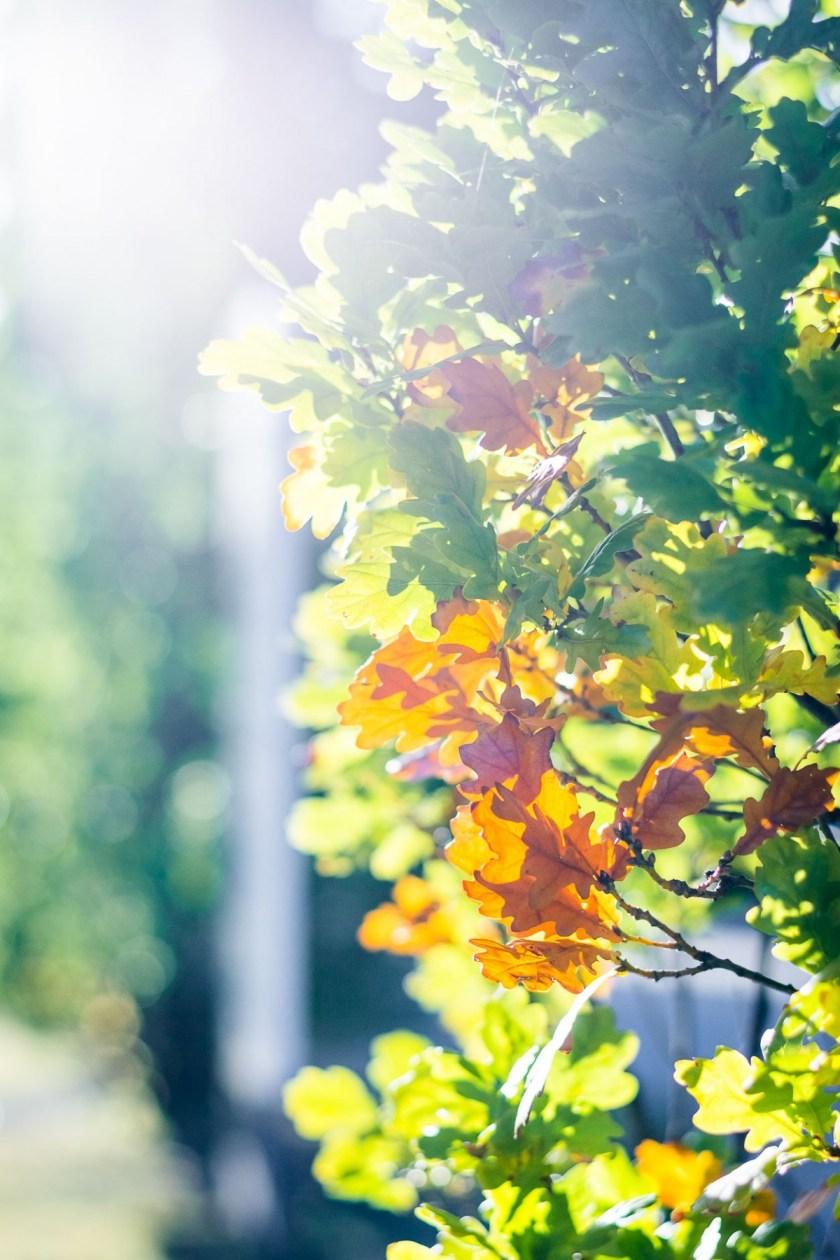Fall in Göttingen, Germany