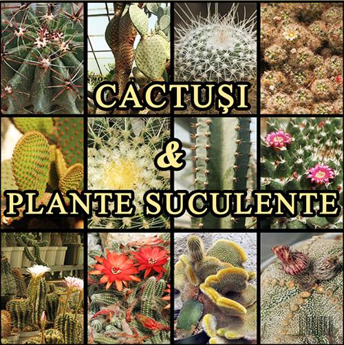 Expo-cactusi