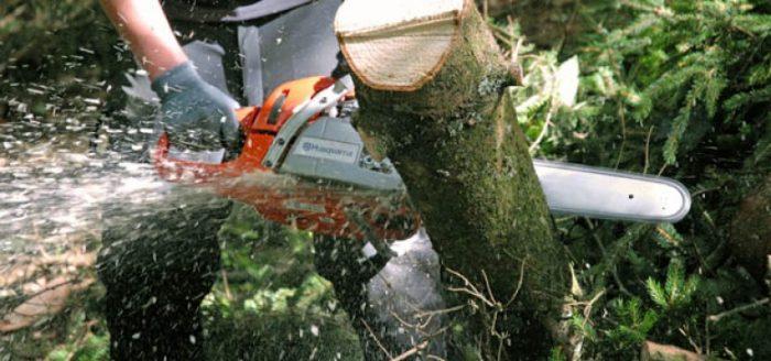 Hoți de lemne, prinși în flagrant