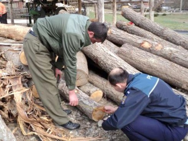 Trei bărbați, prinși la furat de lemne