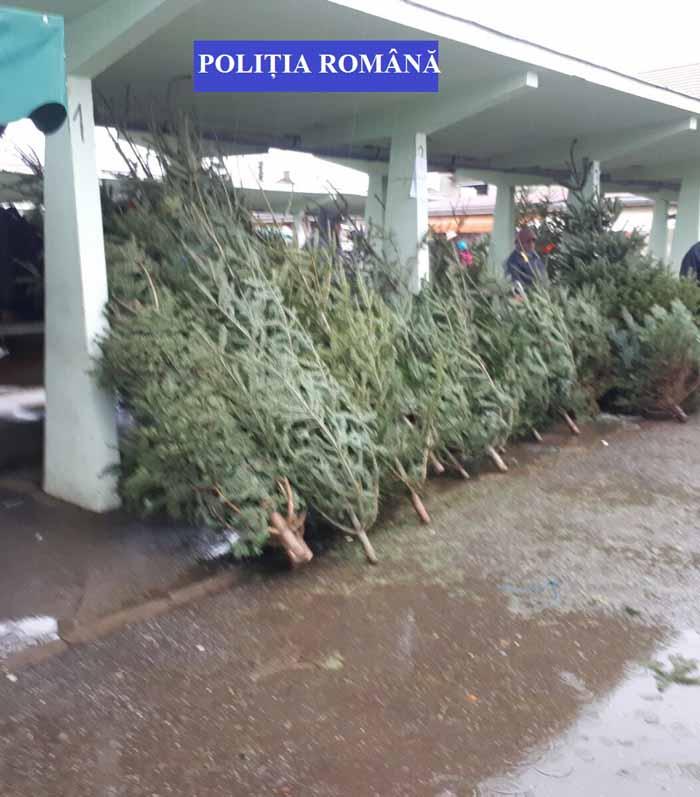 Brazi de Crăciun confiscați de polițiști