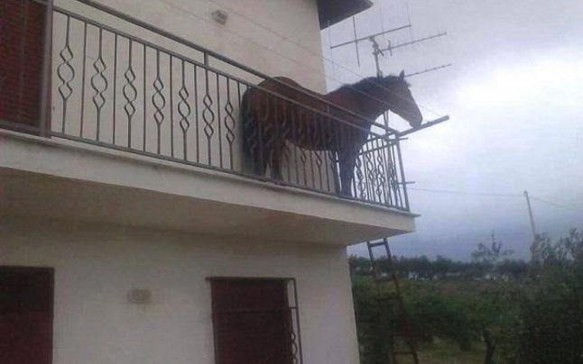 "Si-a ""parcat"" calul in balcon (Foto)"
