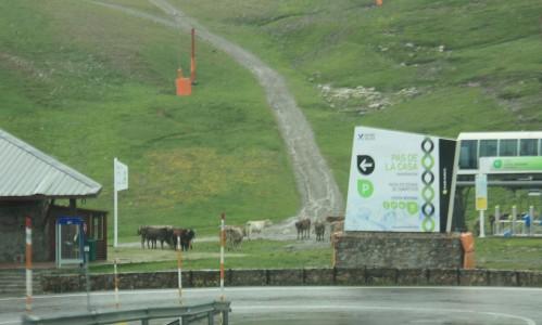 Lehmät hissijonossa