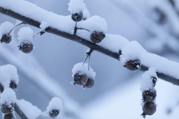 Talvipuutarha-2