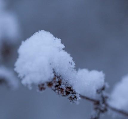 Talvipuutarha-7