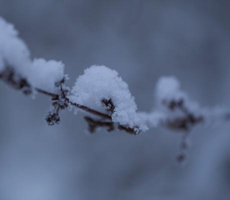 Talvipuutarha-8