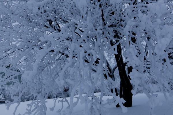 Tammikuun kuvia-6