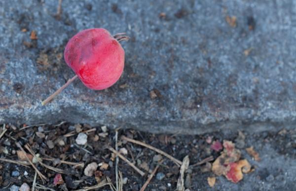 06 punainen