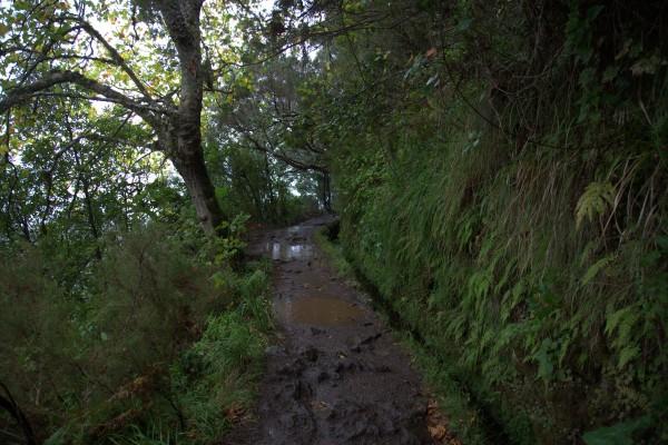 Madeira 2013_ torstain patikka laurisilva 038