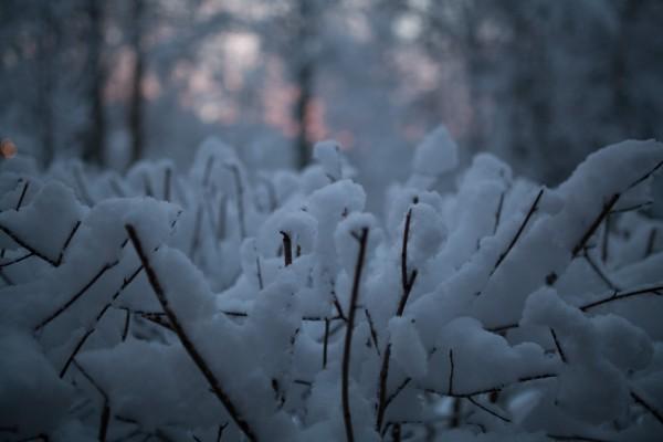 Kotipihan lumimaisemia-4