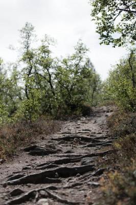 Patikka Luulammelle 2014-24