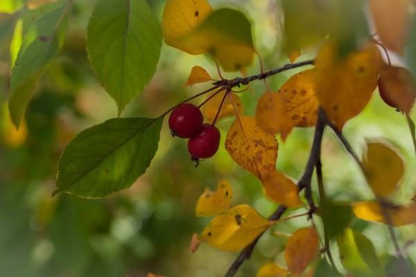 keltaiset lehdet-8