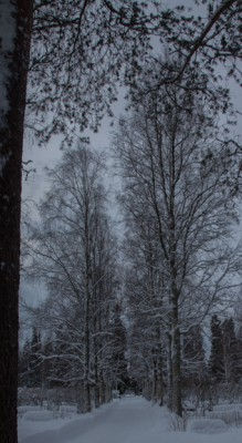 Pihlajanmarjat ja lumi_-4