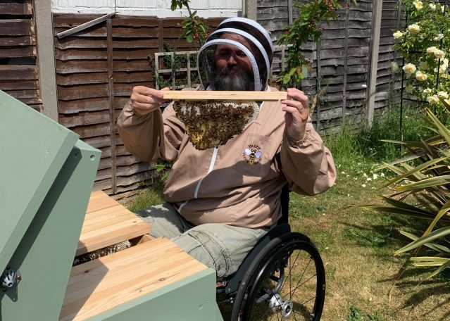 Disabled beekeeper in wheelchair carrying out an inspection on a Top Bar beehive