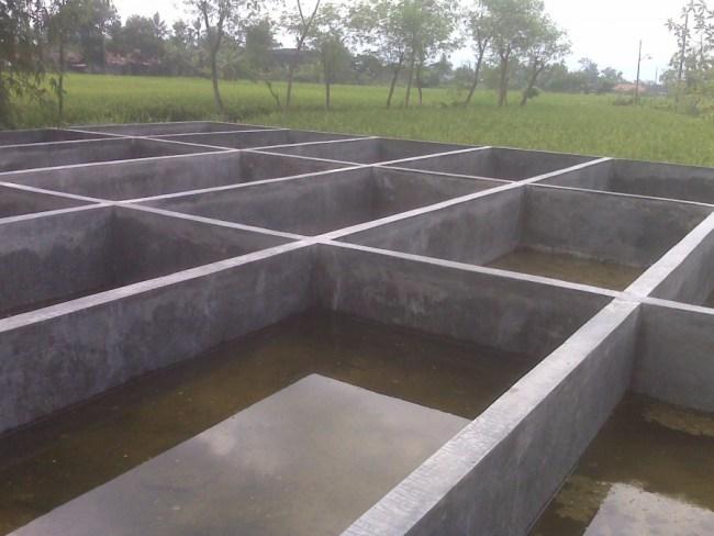 Kolam Budidaya Ikan Lele