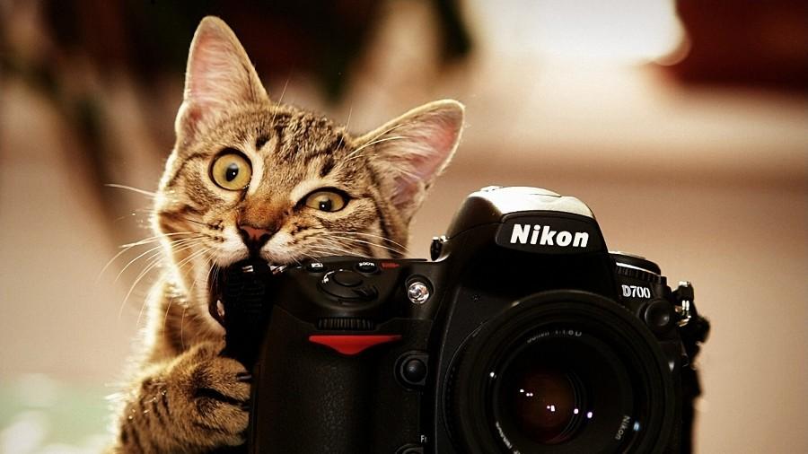 Hasil gambar untuk gambar kucing