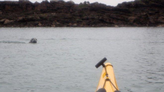 Ynys Dulas - Seal
