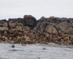 Skerries Seals