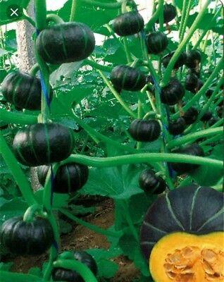 Misti Kumra Seeds
