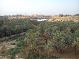 Date palms in the wadi by Diriyah