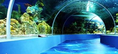 Fakieh Aquarium (photo: fakiehaquarium.com)