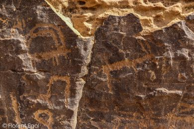 Some of the numerous carvings of ibex (photo: Florent Egal)