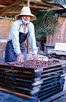 Khadrawy dates are arranged in racks, washed and dried.