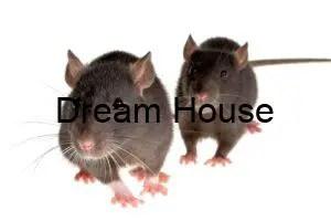 ايات لطرد الفئران من المنزل