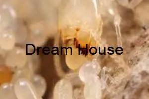 علاج النمل الابيض بالاعشاب