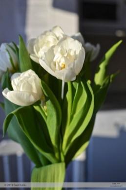 Kukkakuva