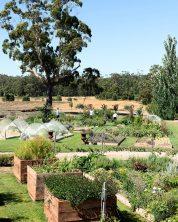 Our kitchen garden
