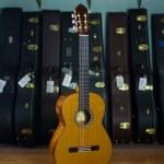 GV Rubio Estudio 640mm Cedar Palo Escrito #21614