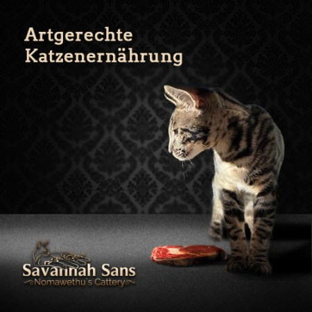 Die moderne BARF Katzenernährung