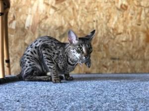 BARF Katzenernährung