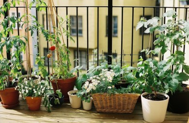 Le jardinage urbain save eat