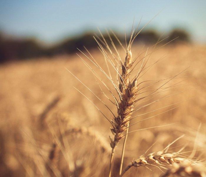 céréales et produits céréaliers save eat
