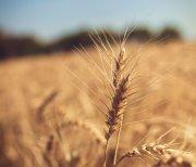 Les céréales et produits céréaliers à consommer tout au long de l'année