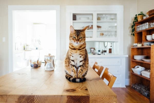 Faire un répulsif naturel pour éloigner les chats avec des épluchures d'agrumes, Save Eat