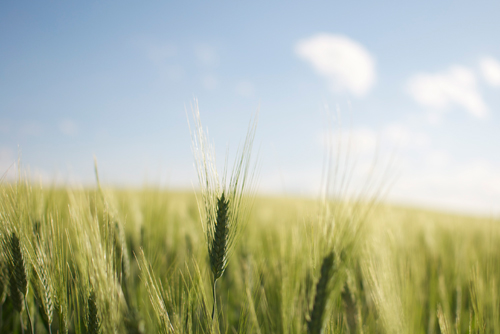 terra fertile per risparmio acqua