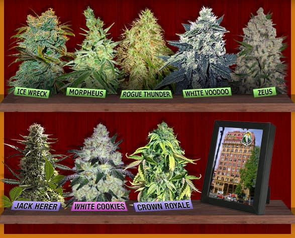Crop King Seeds Store Discount Coupon Promo Certificate Offer3